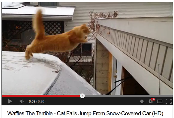 【萌えキュン動画】雪にスベッてジャンプに失敗するニャンコ
