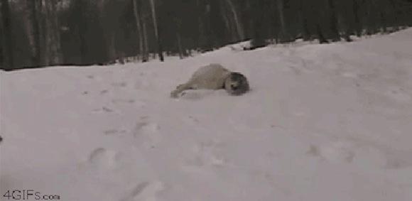 【衝撃GIFアニメ】予想外の「雪すべり」をする犬