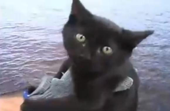 【徹底解説】ネットで話題の「イヌやネコが釣り針に刺されてサメのエサにされる動画」はインチキまみれのデマ動画だから騙されないように要注意