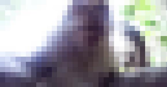 【マジかよ】カメラが猿に盗まれる → カメラを取り戻すことに成功 → 猿の自分撮りが残っていた!