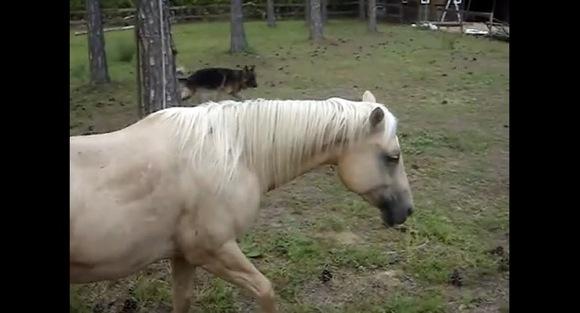 【衝撃動物動画】イケメンな馬が放った「ジャンプっ屁」がカッコイイ