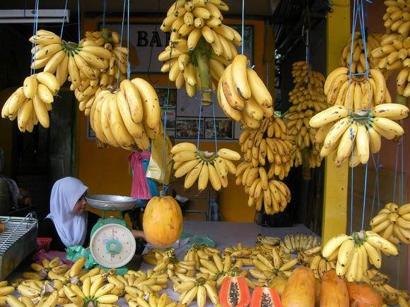【閲覧注意】購入したバナナの中から何百匹ものクモが出現 → 自宅がクモだらけになり外へ避難 → 世界最悪の毒グモと思われることが判明