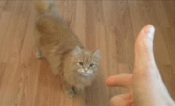 動物に指鉄砲で「バン!」ってやったらこうなる / 犬やイルカ「ぐふっ!!」 猫「はいはい、よっこらしょっと」