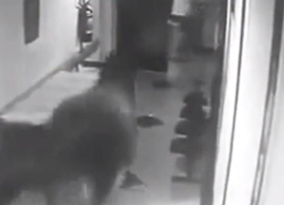 【マジかよ】興奮した「牛」が病院に侵入して廊下を疾走 → 監視カメラにその映像が残っていた!