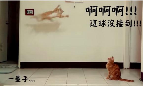【衝撃ニャンコ動画】野球で起きた痛恨のミスが可愛くなる不思議! 猫の動きに実況をかぶせた動画がキュートすぎる!!