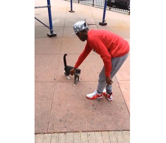 【大炎上】無抵抗なネコを蹴り上げる動画を撮影した人物が「Facebook」で特定され逮捕される
