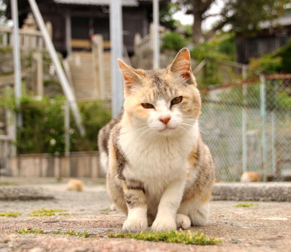 【猫島に行く人必見】愛媛県の青島に行く際に絶対に準備&注意しておきたいこと7つ / 持ち物リストもあり