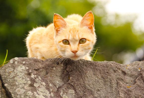 """【猫島レポート】人間の甘やかしによる """"メタボ猫"""" が増加? 観光客急増中の愛媛県の『猫島』こと青島にもメタボ猫がいるのか見にいってみた"""