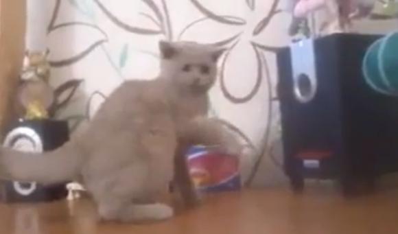 「おい! 黒い箱から何か飛んできてるぞ!!」スピーカーから流れるベース音と格闘するネコが話題