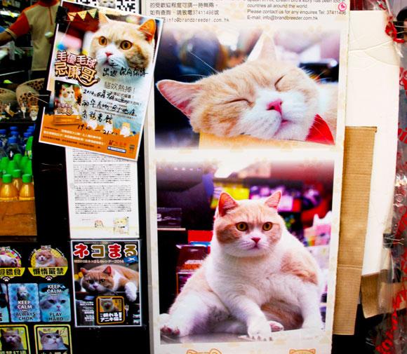 【世界猫探訪】香港のアイドル猫「クリーム兄貴」に会いたい