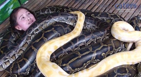 【衝撃動画】巨大ヘビを何匹も体にのせて行う「大蛇マッサージ」がとにかく凄い!!