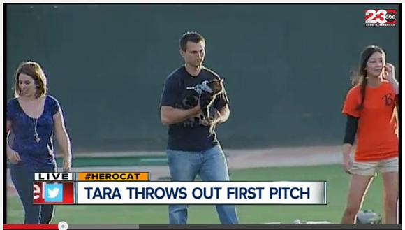 【動画】子どもを犬から救った「ヒーロー猫」が本当に始球式に参加! 一体どうやってボールを投げたのか!?