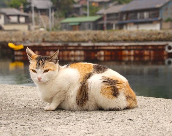 【猫の楽園】画像74連発! 愛媛県の猫が100匹住む島「青島」写真集