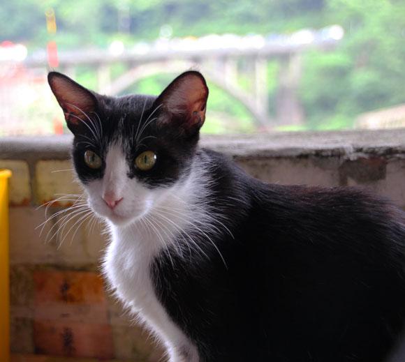 """台湾にも """"猫の楽園"""" があった!! ニャンコ100匹が暮らす猫村「猴硐(ホウトン)」 九份の最寄り駅から1駅! 足を伸ばして行ってみよう"""