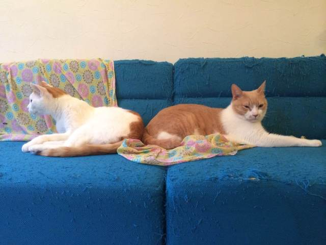 【楽園】恵比寿駅近くにある猫カフェ『ニャフェ メランジェ』が天国すぎる件 / 無線LANや電源もあり仕事も可能
