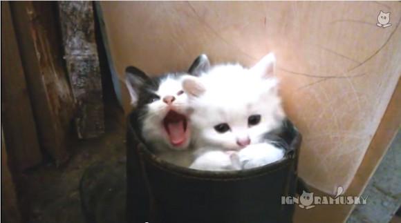 【キュン死動画】こんなの反則だ! ブーツの中に入っちゃった子猫たちが猛烈にどうしようもなく可愛い!!