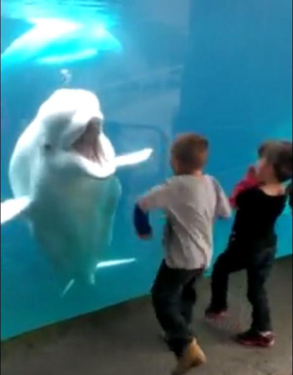 【動画】中に人が入ってるだろ!? 見事な顔芸とリアクションで人の笑いを取りにいくシロイルカが大人気!