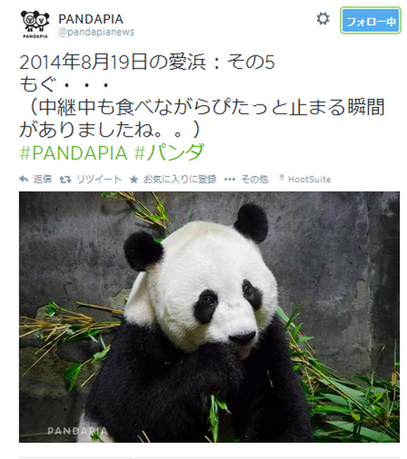【マジかよ】出産中継パンダは妊娠していなかったことが判明 / 研究員「美味しい餌とエアコン付個室欲しさに妊娠したふりか」