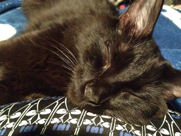 8月17日は「黒ネコ感謝の日」!不人気な黒ネコに家族を見つけようと奮闘する保護団体の姿を知ってほしい!!