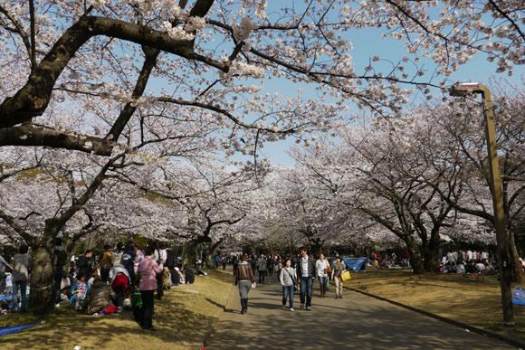 海外渡航歴のない女性が「デング熱」に感染した場所は東京・代々木公園であった可能性が浮上 / 薬剤散布で蚊の駆除を行う