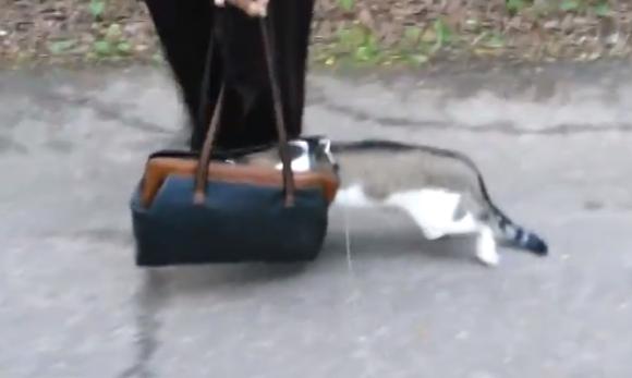 【マジかよ動画】生まれて初めて外に出たネコの姿が衝撃的! 頭をカバンに突っ込んで歩く!!