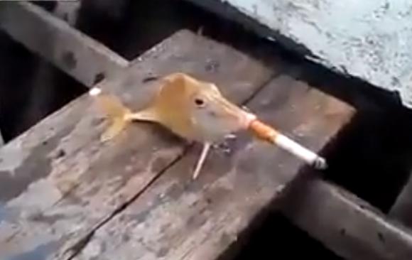 【衝撃動画】魚にタバコを咥えさせている動画に世界中から批難殺到 / ネットの声「言葉を失った」「ただ残酷なだけ。笑えない」