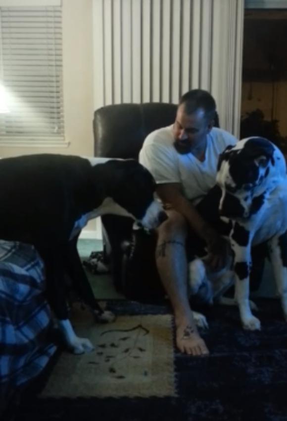 犬が嫉妬するとこうなるっていう動画 / 「どうして自分を可愛がってくれないんだ!」と怒りまくる