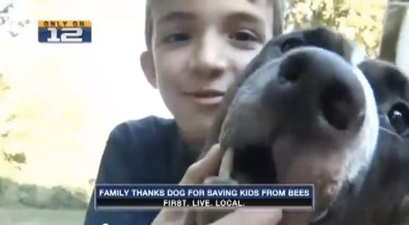【犬と少年】見習うべき勇敢さと冷静さ! 蜂の大群から少年を救ったワンコがとにかくエライ!!