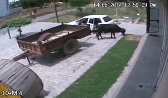 【衝撃ロシア動画】ロシア人の牛を盗む方法が強引すぎてヤバいと話題に
