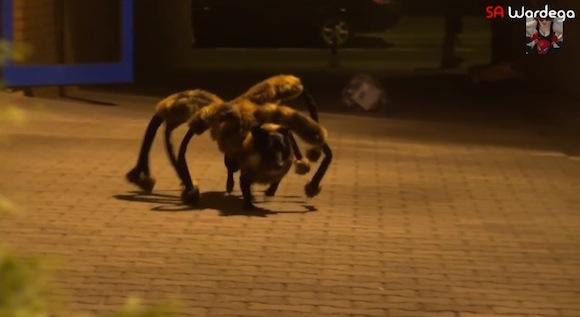 【ドッキリ】再生回数が約9000万回! 犬とクモが融合した「怪奇クモ犬」が登場する動画が本気で怖い!!