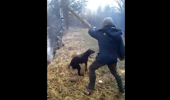 【過酷】ロシアでは犬に棒を取ってこさせる遊びもロシアンレベル!