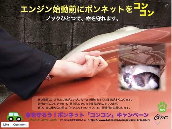 【ネコの命を救え!】寒くなったらボンネットを叩いてから車のエンジンをかけよう / エンジンルームにネコがいるかもしれないよ!!