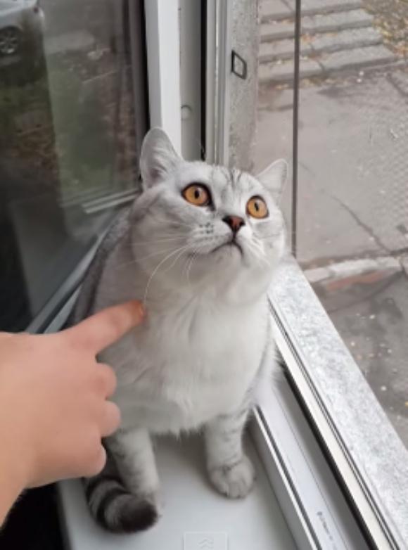 【どう見える?】何を考えているのか気になって仕方がない猫の動画が話題 / ネットの声「底知れぬ絶望を味わっている」「無の境地に達している」