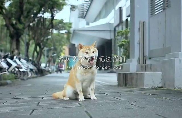 【ハンカチ必須】ペット虐待防止キャンペーンで公開された「捨てられた犬が一途に飼い主の元へ戻ろうとする動画」がマジで涙を誘う