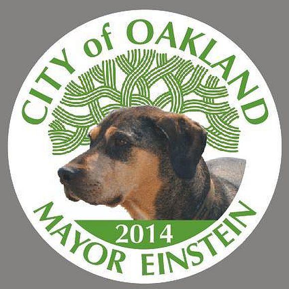 米カリフォルニア州オークランド市で「犬のアインシュタイン」が市長に立候補!