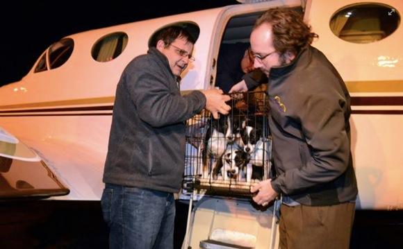 「天が呼ぶ 地が呼ぶ 犬が呼ぶ」 空の上からヒーロー参上!飛行機で犬を助けまくるパイロット軍団がカッコイイ!!