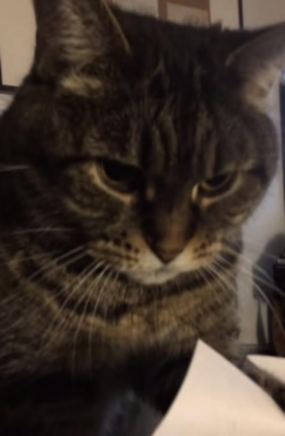 一心不乱に紙をめくり続ける猫の動画が再生回数130万回オーバーの大ヒット / ネットの声「一日中見ていられる」「今日が悪い日だったらこれを見ろ」