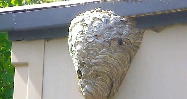 【マネ厳禁】スズメバチの巣に放水で対抗する動画がスゴい!! 火炎放射器で撃退する方法もかなりワイルド!