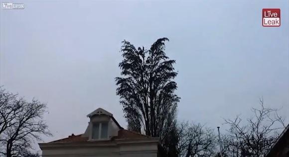 【衝撃動画】一本の木から飛び立つ鳥の数が想像以上にヤバイ