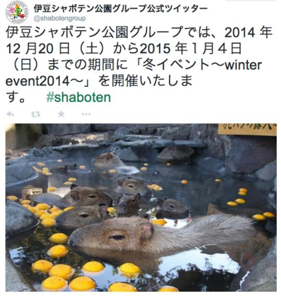 【ミッキーも嫉妬】日本全国で可愛すぎる「カピバラ温泉」開催中! 繰り返す「カピバラ温泉」開催中!!