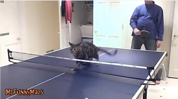 【ニャン卓】ネコに卓球をさせたら最強ってのがよ〜く分かる動画がコレだ! 「あきらめたら、そこで試合終了ですよ」という名言が思い出される