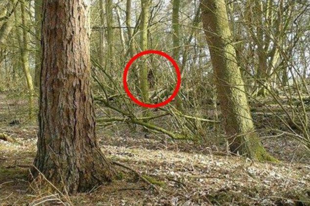 イギリスにビッグフットが出現か!? ビッグフットらしき姿が映った写真や音声動画がとらえられる! 足跡らしき物も発見