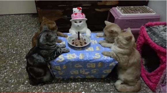 猫のために開かれた誕生パーティが「邪教の儀式」にしか見えないと話題