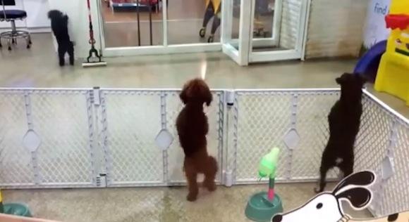【癒し動画】これは悶絶レベル! ノリノリでサルサを踊る犬がキュートすぎる!!