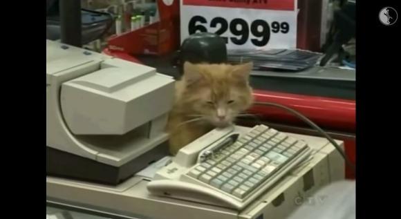 【ネコだって働くニャン!】図書館・セラピー・接客……などなど / 6種類の働くネコたちをご紹介!