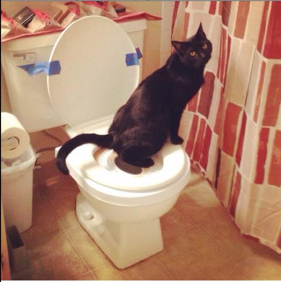 【ネコ体験談】ネコに人間用のトイレを使うように教えたよ! → とんでもないことが起こっちまった!!