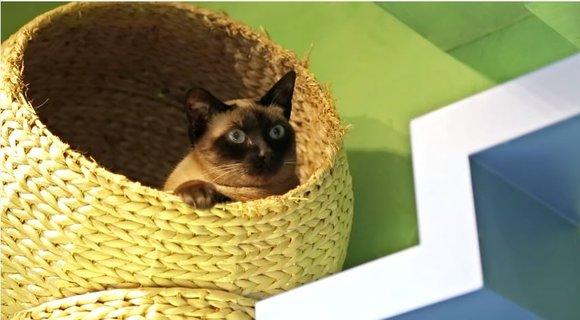 【ニャンコの楽園】全てはネコのために! ネコ仕様に改装された家が素晴らしい 「ウチもこんな風にしたい!」とネコ飼いから羨望のまなざし