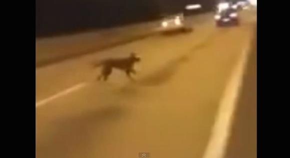 【恐怖映像】何度見ても理解不能! 謎の空間から犬が出現する心霊現象がマジでヤバイ!!
