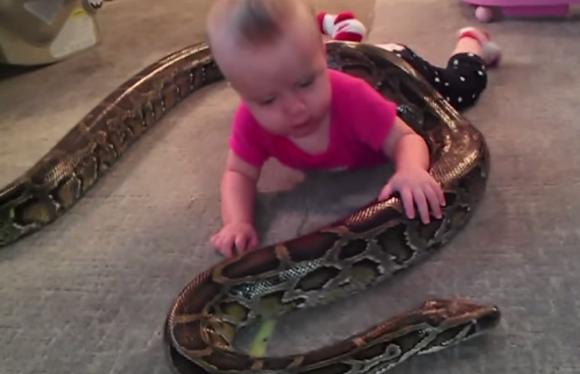 【閲覧注意動画】飼っているニシキヘビと赤ちゃんを一緒に遊ばせる映像が恐ろしすぎる