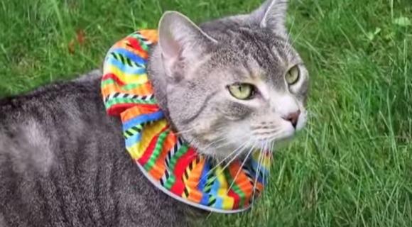 """【命だいじに】""""天性のハンター"""" ネコから小動物を守れ! 「ど派手で巨大な首輪」をネコに装着させれば狩り成功率が半減"""